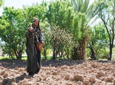Sower Seeds