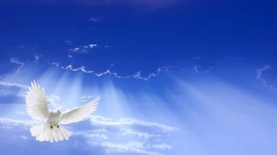 Dove-Spirit
