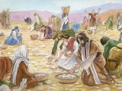Manna Exodus