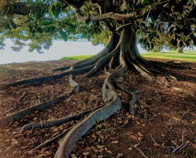 tree-serpent